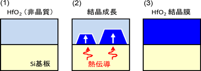 図2:開発した高誘電率結晶膜(HfO2)の合成方法。(1) シリコン基板上に非晶質状態のHfO2膜を堆積、(2) 基板からの熱伝導を利用して界面からの結晶成長を促進、(3) 隙間の無い、ち密な結晶膜が完成。: 図2:開発した高誘電率結晶膜(HfO2)の合成方法。(1) シリコン基板上に非晶質状態のHfO2膜を堆積、(2) 基板からの熱伝導を利用して界面からの結晶成長を促進、(3) 隙間の無い、ち密な結晶膜が完成。
